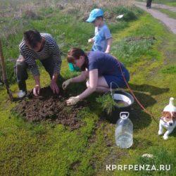 Депутат Иванов – посадка деревьев-003