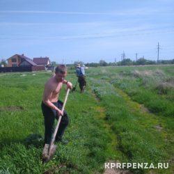 Депутат Иванов – посадка деревьев-005