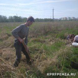 Депутат Иванов – посадка деревьев-006